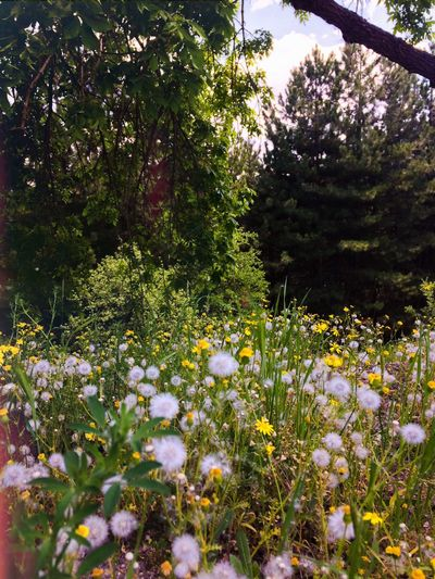 Smells like spring 😄 Plant Flower Flowering Plant Growth Beauty In Nature Freshness Fragility