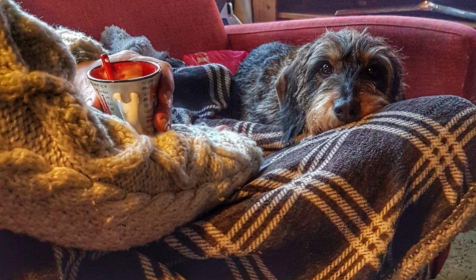 espresso-time Teckel Teckelphoto Teckel Amor Mio Daschund Whiredhairdog Irisch Wienerdog Sausagedog Dackel Dackelblick Dog Dogs Of EyeEm Coffee Time Coffee - Drink Me And My Dog Chillling