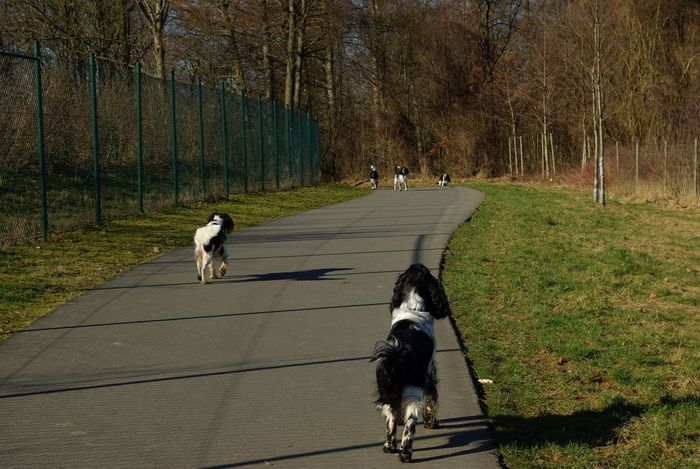 Meeting of the dogs Astonishment Casual Clothing Child Day Dog Domestic Animals Forest Landscape Mammal Motion Nature On The Move Outdoors Pet Owner Pets Rear View The Way Forward Togetherness Transportation Tree Vertebrate WoodLand