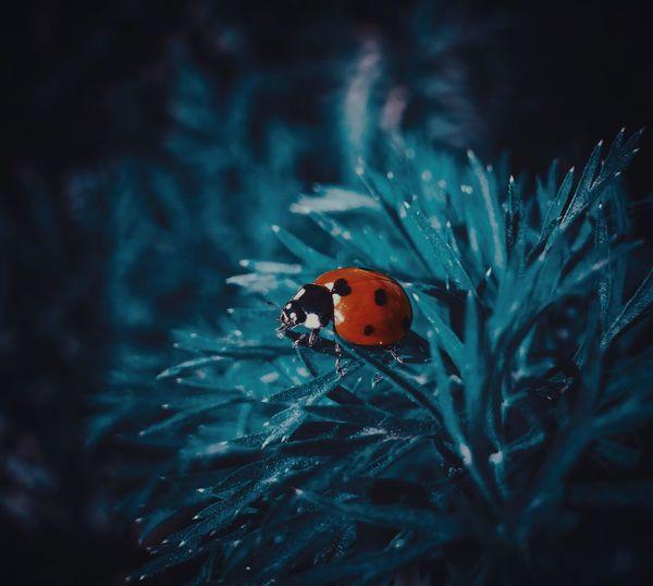 Macro Nature Ladybug Insect Spider Animal Leg Close-up