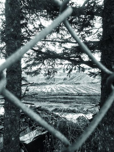 Tree Nature Outdoors Day No People Sky Portland Oregon Usa Rural Scene Landscape Rock Quarry Looking Through A Fence