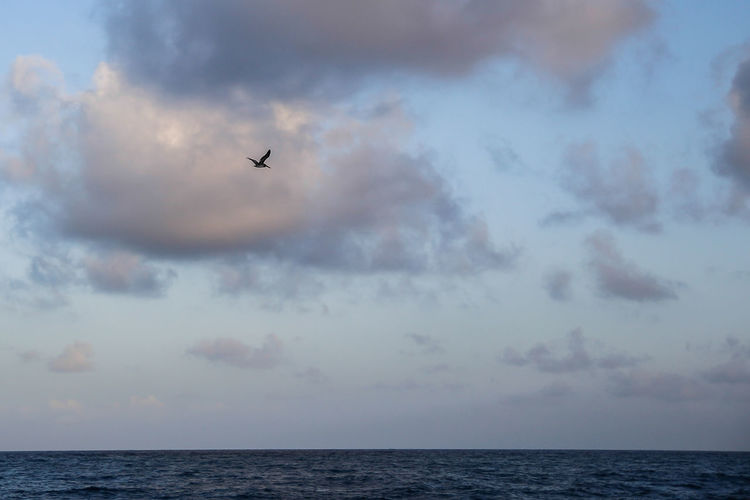 Air Vehicle Airplane Beauty In Nature Bird Cloud - Sky Day Flying Horizon Over Water Nature No People Outdoors Scenics Sea Sky Travel Water Break The Mold.