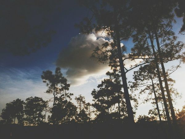 Luvanderos Honduras TheNightIsYoung Taking Photos Lonelycloud Tree Silhouette Tree And Sky