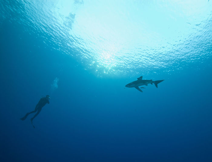 Low Angle View Of Scuba Diver With Shark