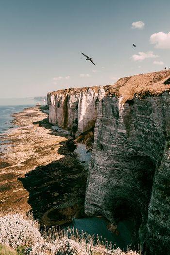 Etretat Rock étretat Sky Sea Water Animal Animal Themes Vertebrate Flying Nature Bird Beach Animals In The Wild Land No People Sunlight Horizon Over Water Scenics - Nature Beauty In Nature Day