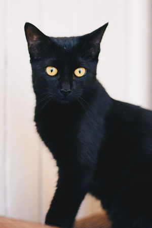 Black Cat Animal Themes Black Black Color Black Kitten Cat Close-up Day Domestic Animals Domestic Cat Feline Indoors  Kitten Looking At Camera Mammal No People One Animal Pets Portrait Sitting Yellow Eyes