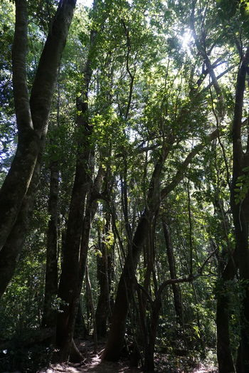Tree Nature Growth Low Angle View Green Color No People Tranquility Beauty In Nature Outdoors Sky Scenics Day Backgrounds Tourism Idyllic Calm Chile Non-urban Scene Refraction Power In Nature Nature Tree Forest Beauty In Nature Lush Foliage