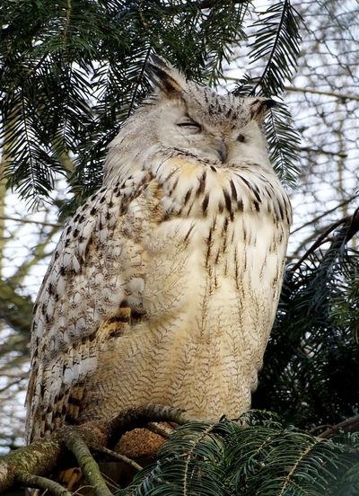 Owl Owls Birds Bird Photography Tree Close-up