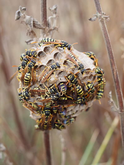 Close-Up Of Wasps On Nest