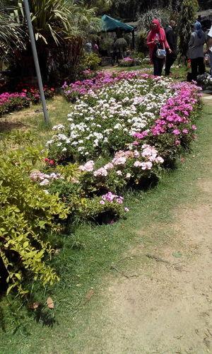 Nature Egypt Flowers Freshness Green Ormanpark White Flower
