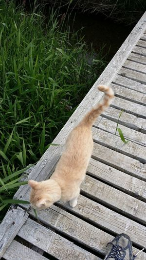 High angle view of cat relaxing on grass