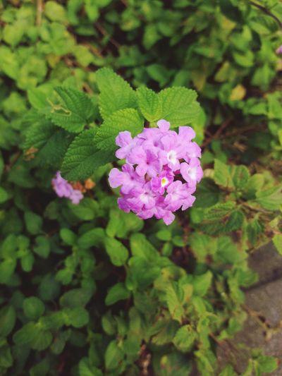 flower in the autumn On A Break
