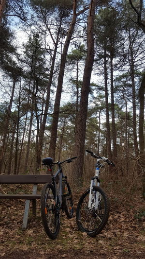 riding with you Forest Riding Bike Bike Bicycle