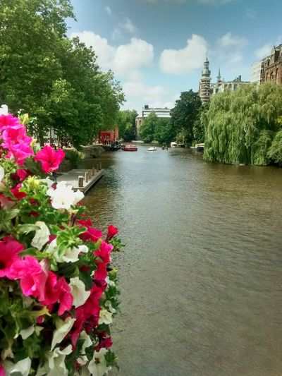 Amsterdam Canal Tree Flower Nature Sky Canal Water Plant Day Freshness Outdoors Interrail2016 No People Sun Sunny Art Weed