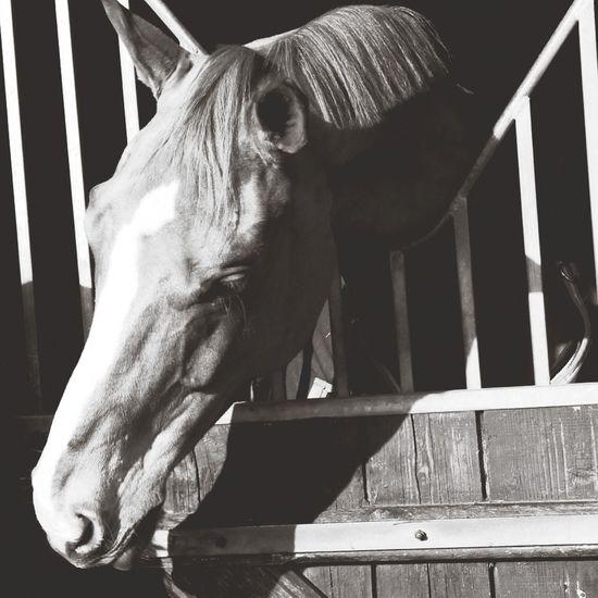 Horse L'équitation Plus Qu'une Passion Vivre De Sa Passion , L'equitation ❤ Animals