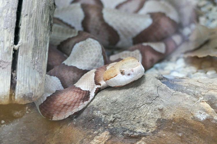Reptile Snake