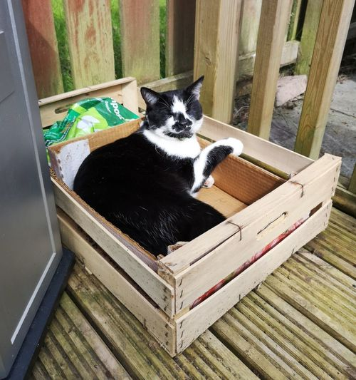Our cat Franklin has been missing for a week and a half now. We are all missing him and are Tring to stay positive that he will return safe. Missing Lost Cat Worry Lost Pet Pets Pet Animal Pets Portrait Domestic Cat Feline Animal Themes Cat At Home