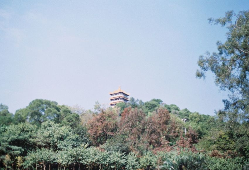Blue Canon Canonphotography China Clear Sky Day Film Film Photography Green Color Growth Low Angle View Nature No People Outdoors Sky Tree