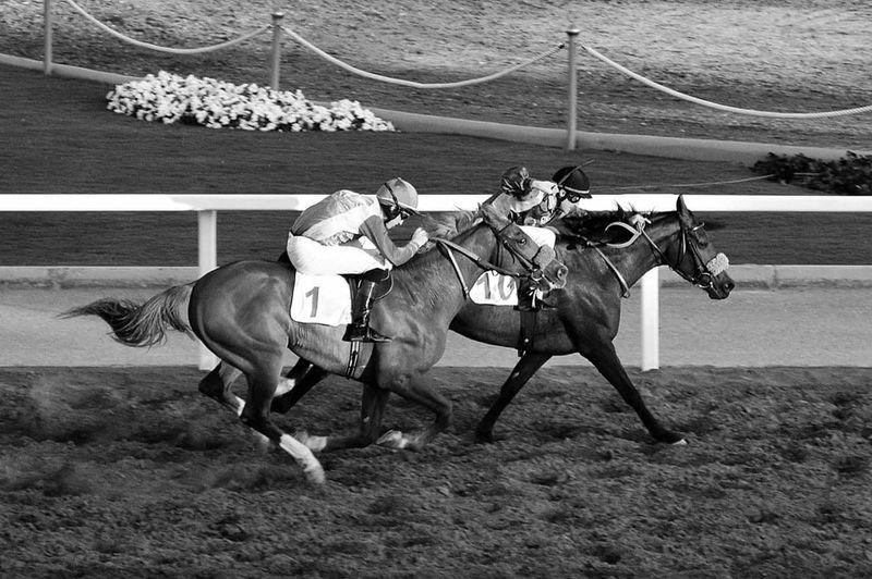 Horse Riding Horse Racing Course Horse No People Eyem Sports Jockey Sport