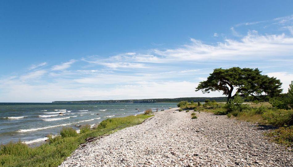 The cove. Cove Bay Sea Ocean Östersjön Sweden Gotland Pinetree Beach Ihreviken Nikon Nikonphotography Nikond600 Tamron2470