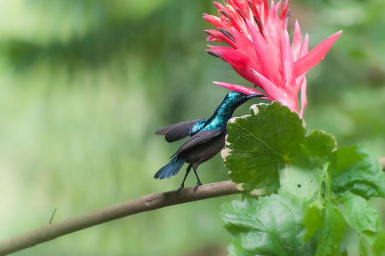 Close-up of hummingbird on flower