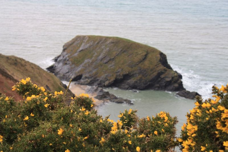 Walking along the coastal path Sea Nature Beach Rock - Object Water No People Outdoors Flower Day Focus On Foreground