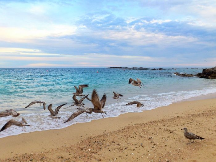 View of seagulls on beach against sky