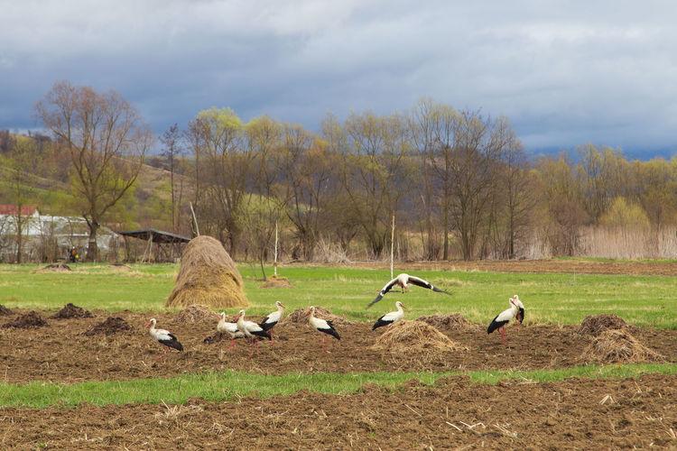 Birds on a field