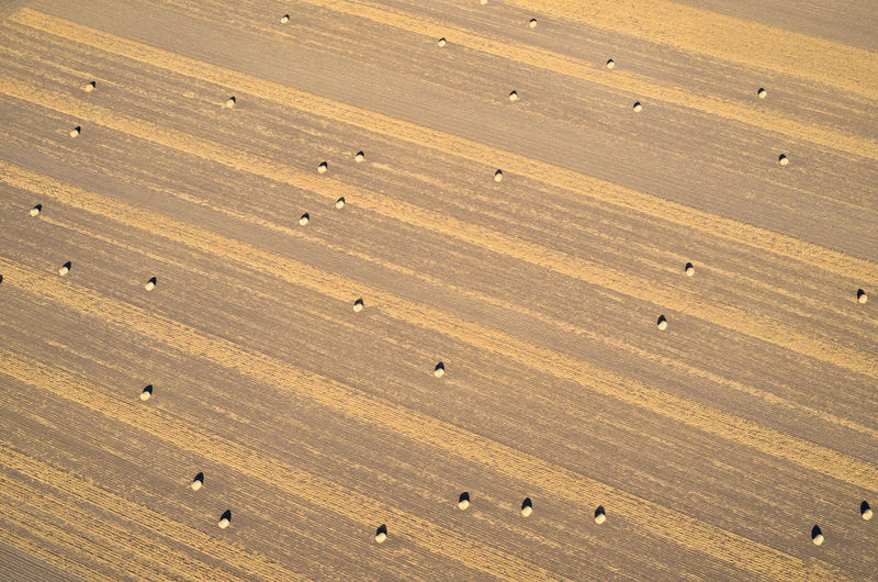 High Angle View Aerial View Aerial Aerial Photography Aerial Shot Corn Cornfield Field Agriculture Farm Farming Agricultural Field Bales Baleage Silage Stripes Pattern Harvesting Rural Scene Landscape Environment In A Row Golden Sunlight