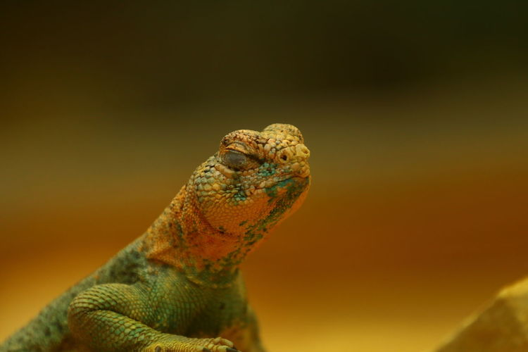 Close-up of a lizard looking away