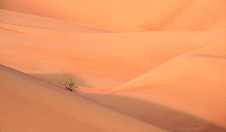 Life in desert Abu Dhabi Abu Dhabi Desert Abu Dhabi Liwa Desert Desert Life In Desert Liwa Liwa Desert Nature Sand Dune Tree Tree In Desert
