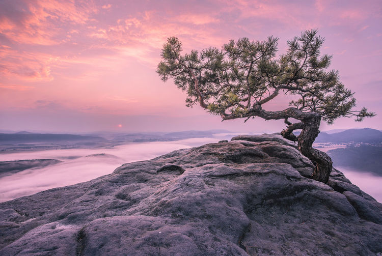 Scenic view of tree growing on mountain during sunset
