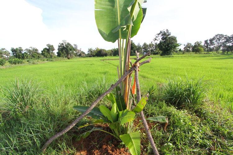 Environment Landscape Traveller's Tree