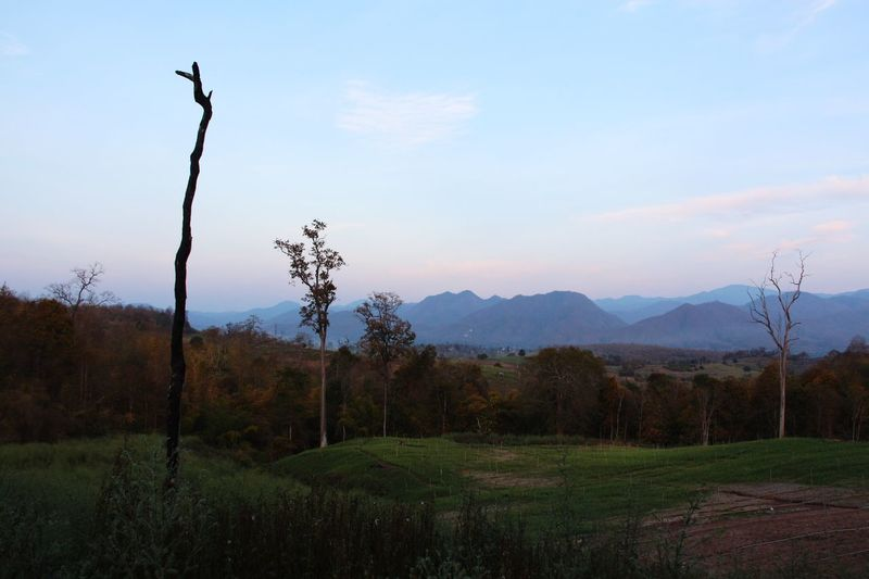Landscape Outdoors Mountains Trees No People Fall Season in North Thailand South East Asia