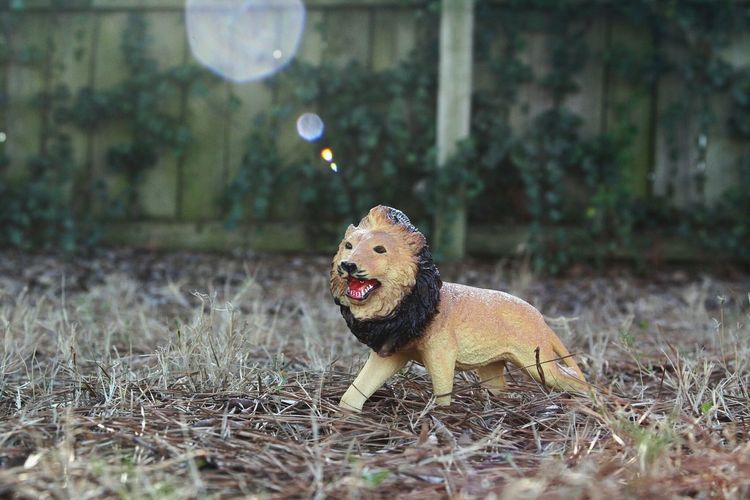 Grass Day Outdoors No People Nature Animal Themes Lion Toy Light Leak Close-up Canon EOS 70D