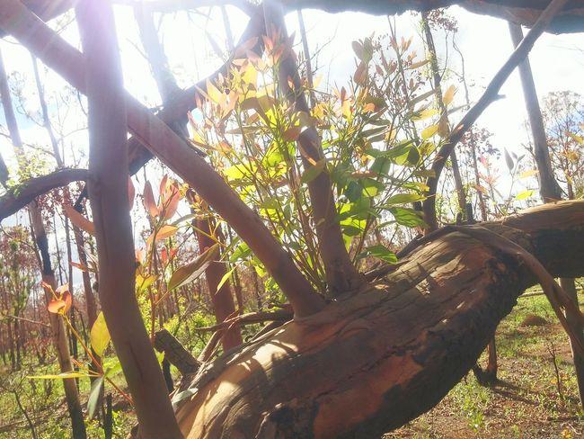 Tree Flona Plantas