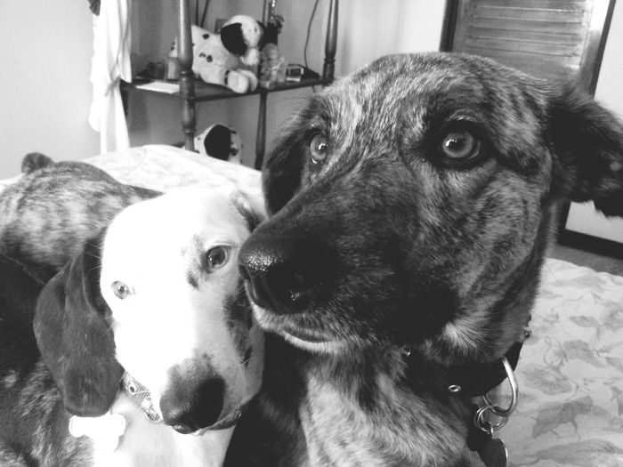 My babies, the males of my life ♥ Taking Photos Monochrome I Love My Dog Imagine There Is No Heaven