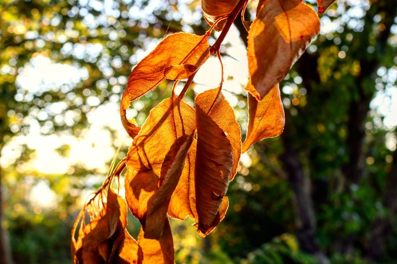 Through the Light Focus On Foreground Plant Tree Nature Orange Color Hanging Day Close-up Low Angle View Outdoors No People Plant Part Leaf Growth Branch Sunlight Dry