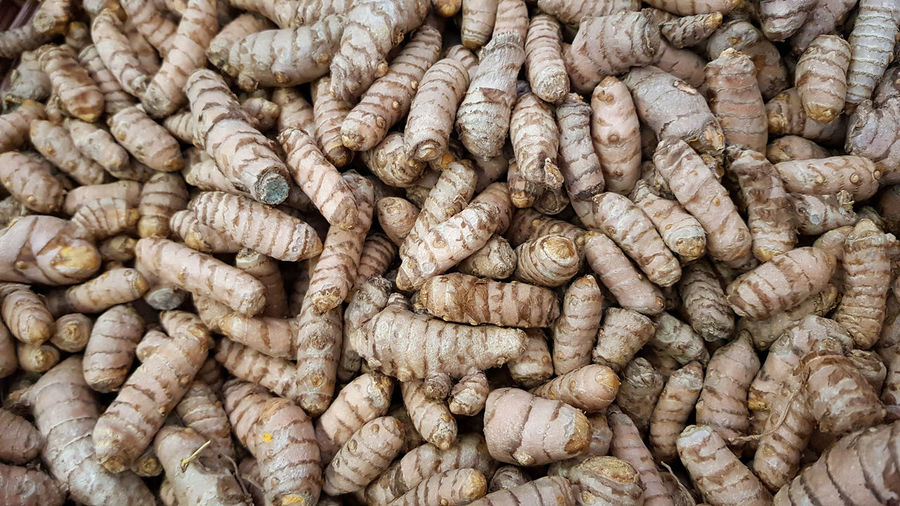 Fresh raw turmeric curcuma longa on sale on local market, used in cooking and making curries