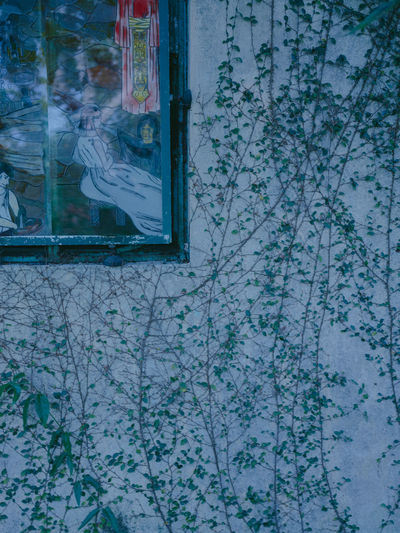 Glass - Material Architecture Built Structure Window No People Day Wall - Building Feature Building Exterior Transparent Reflection Outdoors Plant Nature Building Glass Close-up Art And Craft Pattern Old Paint Floral Pattern