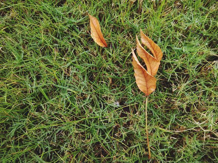 Autumn Leaves Fallen Leaves Autumn Colors 后山的那些树