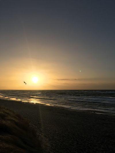 Sea Horizon Over Water Sunset Water Sky Beach First Eyeem Photo