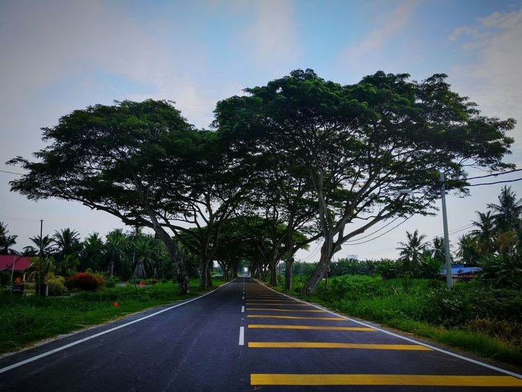 destination never end ADIB2803 Huwaei Photography Huwawie P9 Nature Blue Sky Tree Road Sky Empty Road Double Yellow Line Road Marking Dividing Line Country Road Treelined Yellow Line White Line The Way Forward