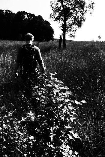 Grass Solitude