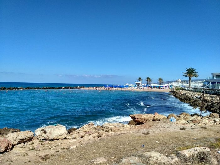 #israel Water Sea Beach Clear Sky Swimming Sand Blue Tree Summer Sunny Flamingo Freshwater Bird Animal Neck