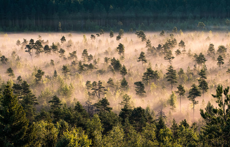 Morning fog and sunrise in Torronsuo National Park, Finland Autumn Finland Morning National Park Swamp Tranquil Tranquility Atmospheric Mood Beauty In Nature Fog Foggy Forest Growth Landscape Mist Nature No People Outdoors Scenery Scenics Sunrise Tranquility Tranquillity Tree Tree Area