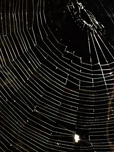Beauty In Nature No People Outdoors Spider Web Nature Full Frame Day Close-up Star Trail Astronomy