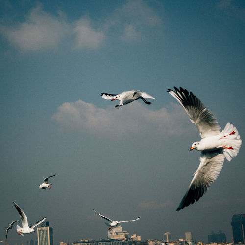 Animal Themes Animals In The Wild Bird Carefree Clouds Clouds And Sky Flight Flock Of Birds Flying Istanbul Lightroom Low Angle View Mid-air Motion Seagull Sky Spread Wings Two Animals Urban Urbanphotography VSCO Vscofilm Wildlife Zoology