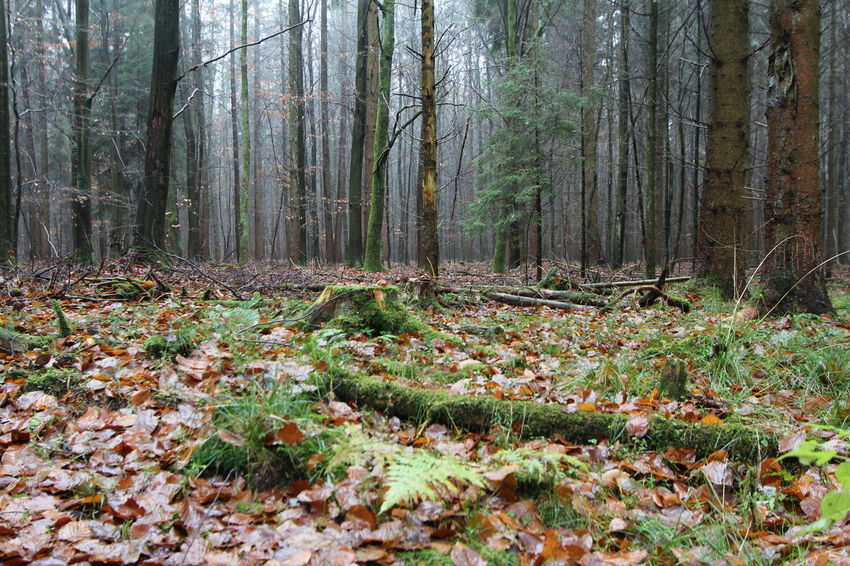 A December Sunday in the woods ... Autumn Beauty In Nature Forest Landscape Nature No People Outdoors Scenics Tranquil Scene Tranquility Tree Tree Trunk WoodLand