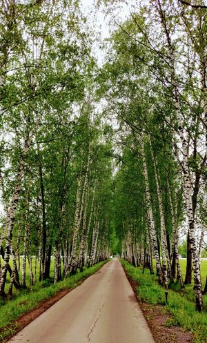 Trees Interesting Perspectives Trees And Nature Ecology Nature Nature_collection Lonely Way Green Color Live For The Story Life Weed Road Trees And Leaves Trees!